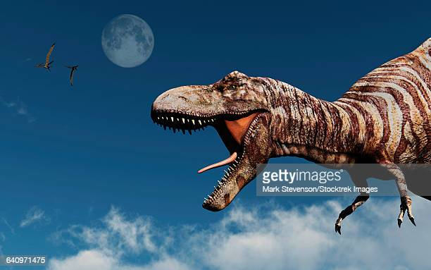 profile of a tyrannosaurus rex. - paleontology stock illustrations