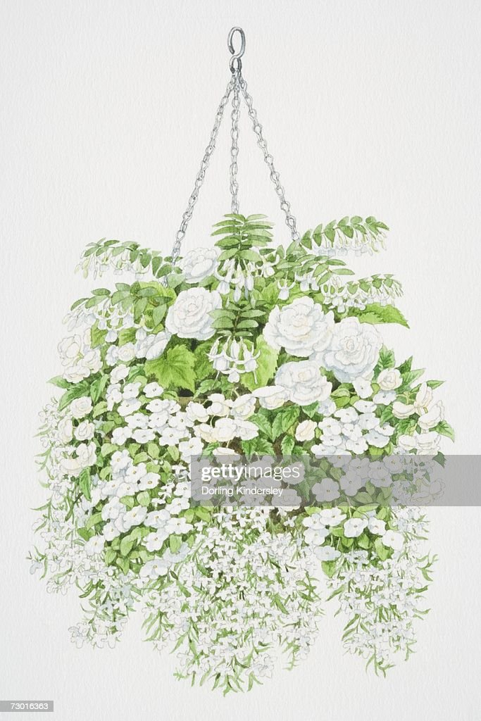 Profusion of white flowers tumbling from hanging basket from top to profusion of white flowers tumbling from hanging basket from top to bottom bell mightylinksfo