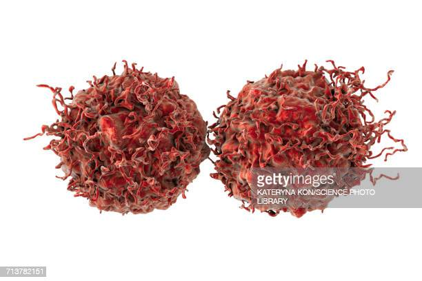 prostate cancer cells, illustration - tumor stock illustrations