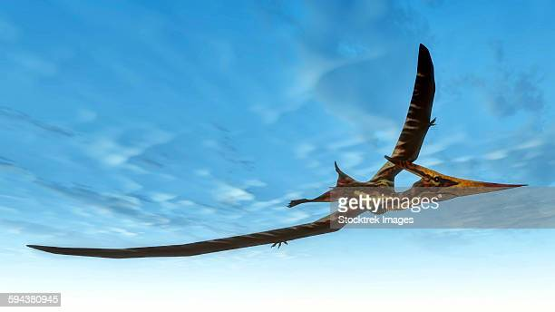 Pteranodon bird flying in blue sky.