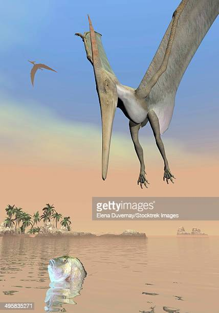 Pteranodon fishing for food.