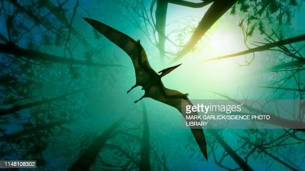 pteranodon flying through a forest, illustration - paleontology stock illustrations