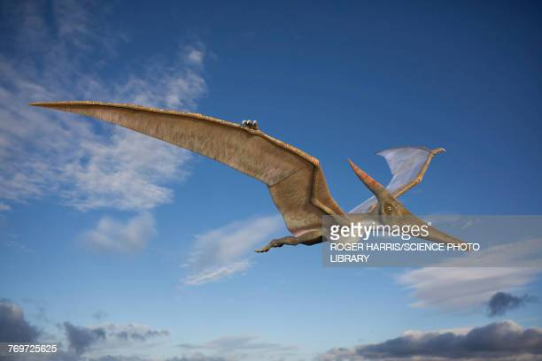 Pteranodon in flight, illustration