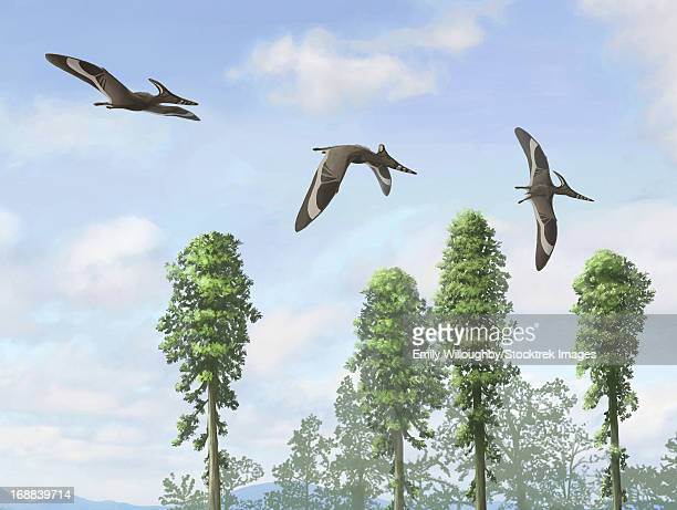 Pteranodon longiceps trio, two males and a female.