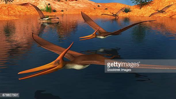ilustraciones, imágenes clip art, dibujos animados e iconos de stock de pteranodon reptiles searching for food in a lake. - paleozoología