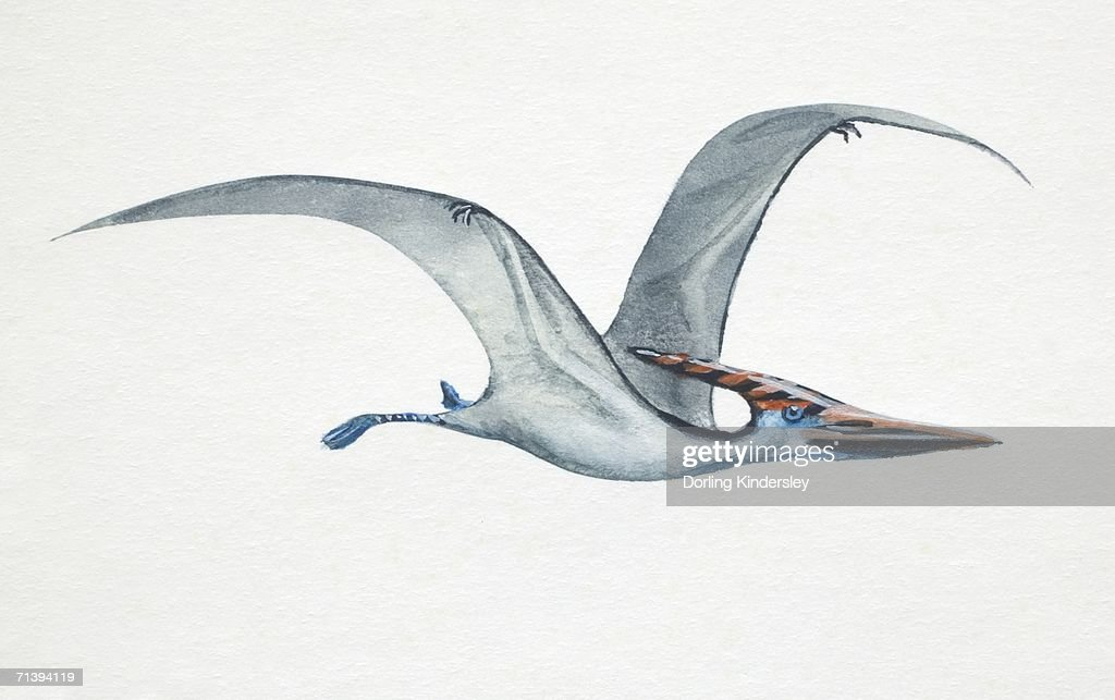 Pteranodon, side view. : Ilustración de stock