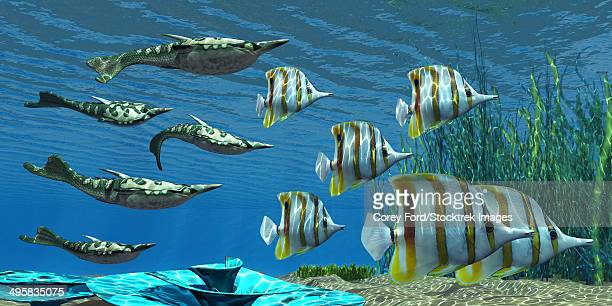 Pteraspis is an extinct genus of jawless ocean fish that lived in the Devonian period, seen here with a group of Chelmon Butterflyfish.
