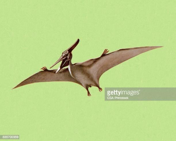 ilustraciones, imágenes clip art, dibujos animados e iconos de stock de pterodáctilo - reptil