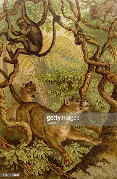ilustraciones, imágenes clip art, dibujos animados e iconos de stock de pumas caza monos - puma