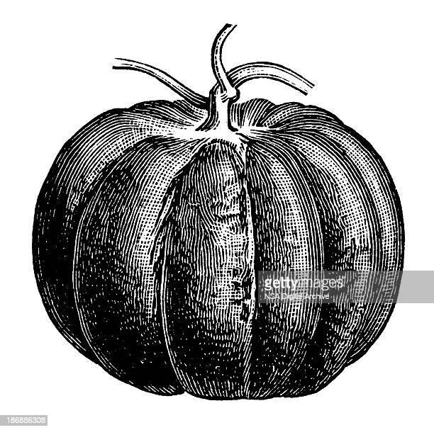 pumpkin | antique design illustrations - 19th century stock illustrations