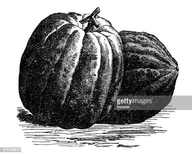 pumpkin - marrom stock illustrations