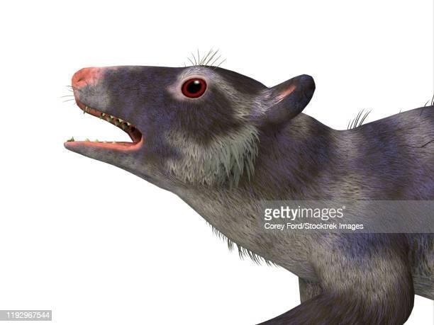 illustrazioni stock, clip art, cartoni animati e icone di tendenza di purgatorius primate head. - mammifero