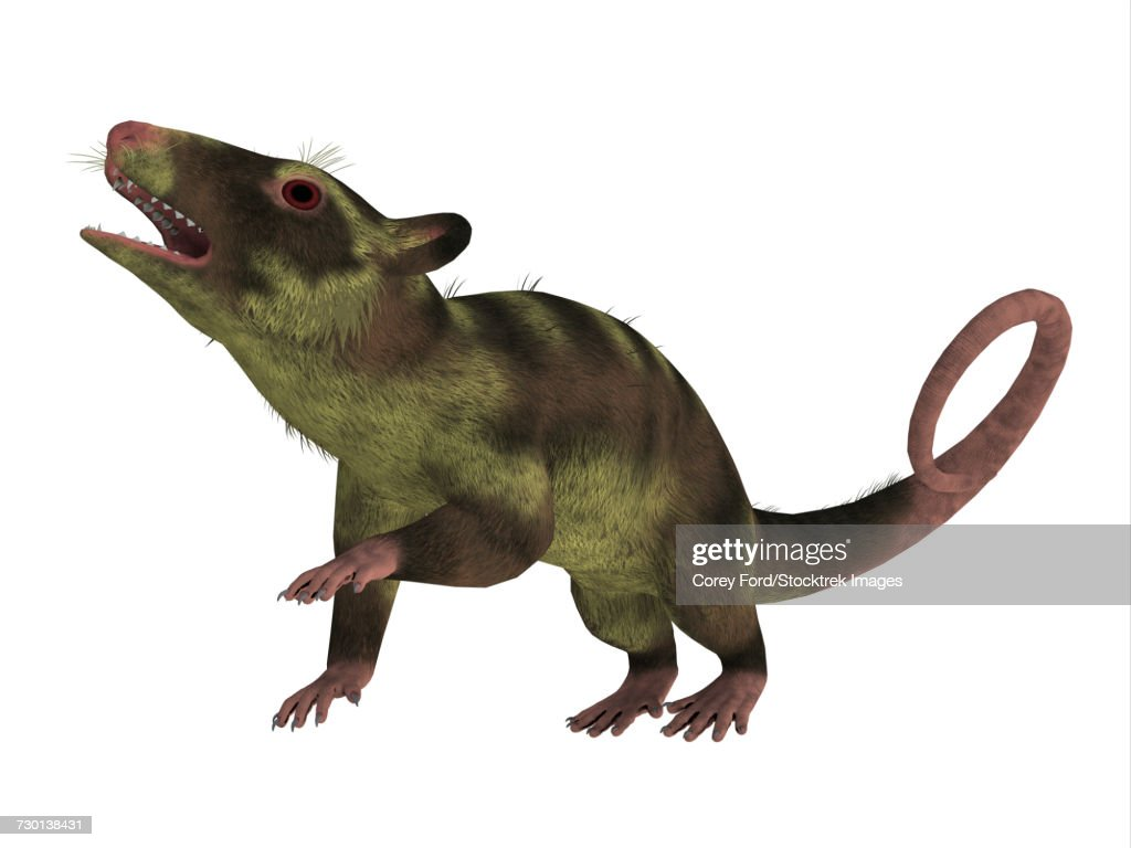 Purgatorius primate on white background. : stock illustration