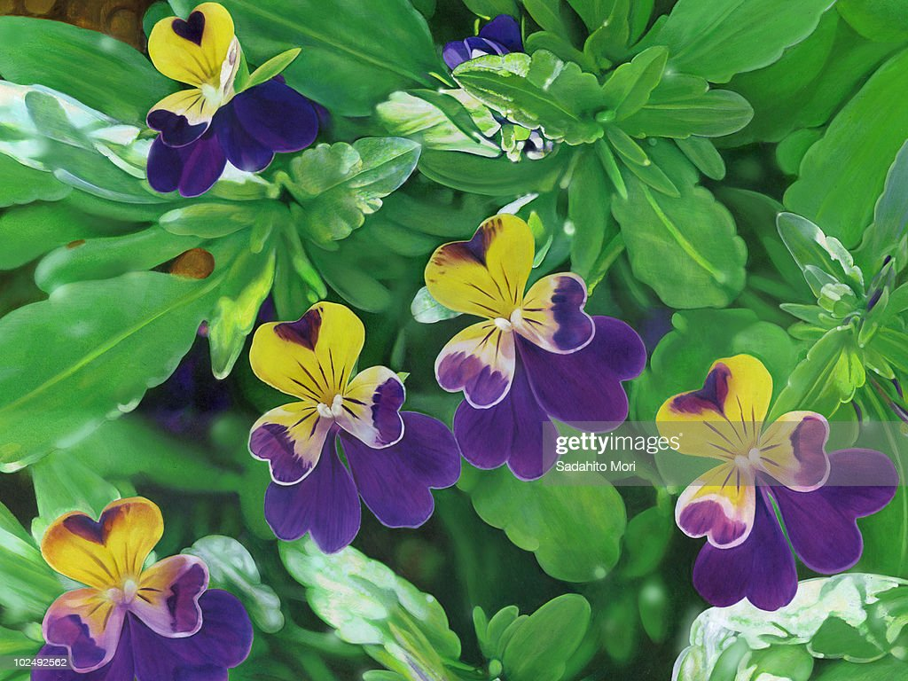 Purple And Yellow Flowers With Heart Shaped Petals Stock