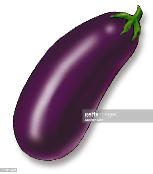 a purple eggplant drawn against a white background - stehen stock illustrations