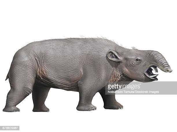 ilustraciones, imágenes clip art, dibujos animados e iconos de stock de pyrotherium is an extinct ungulate from the oligocene epoch of argentina. - paleozoología