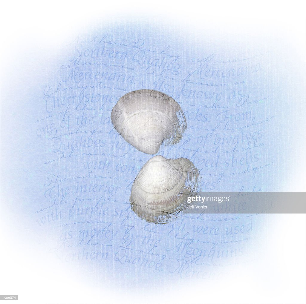 Quahog on Wavy Descriptive Background : Stock Illustration
