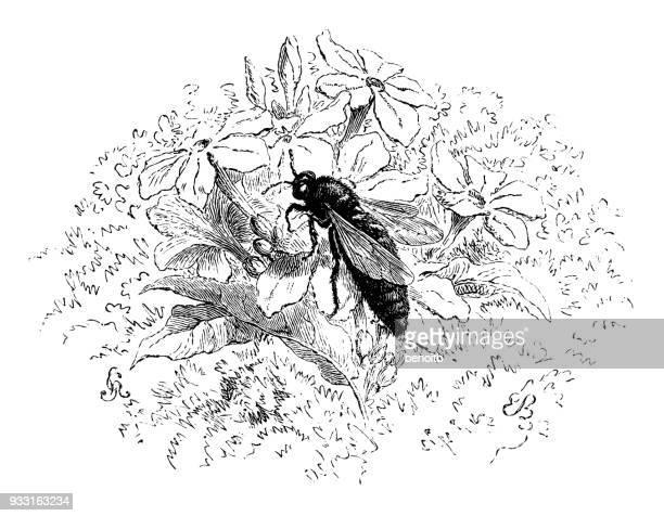 女王バチ - queen bee点のイラスト素材/クリップアート素材/マンガ素材/アイコン素材