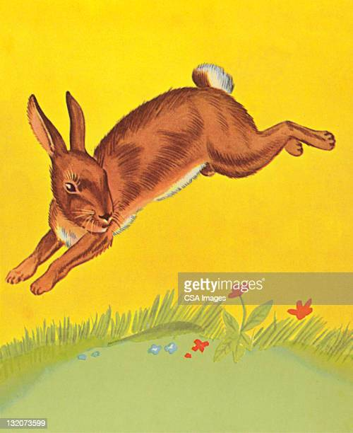 Rabbit Jumping