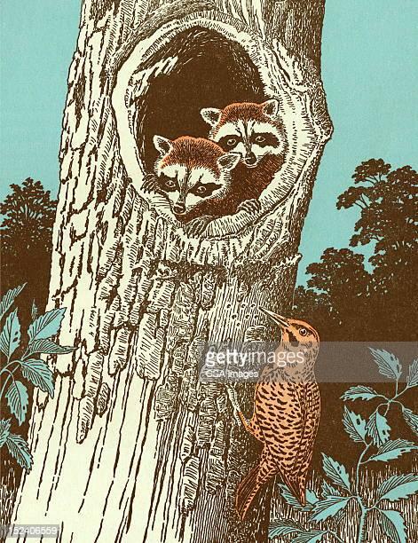 raccoons and bird - tree trunk stock illustrations, clip art, cartoons, & icons