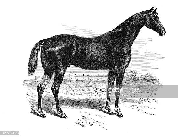 race horse engraving - horse stock illustrations