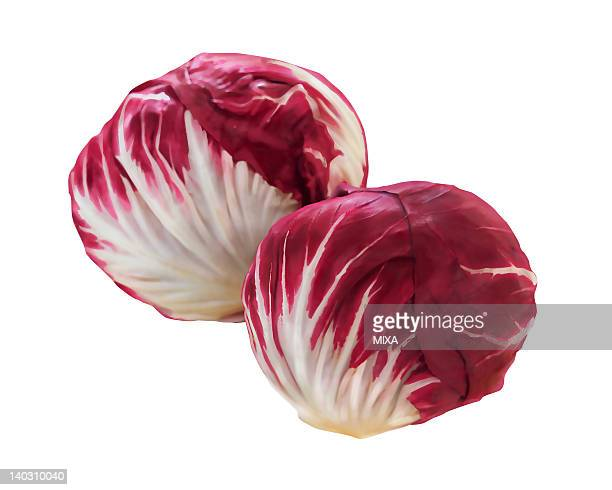 radicchio - chicory stock illustrations, clip art, cartoons, & icons
