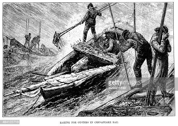 raking for oysters in chesapeake bay - chesapeake bay stock illustrations, clip art, cartoons, & icons