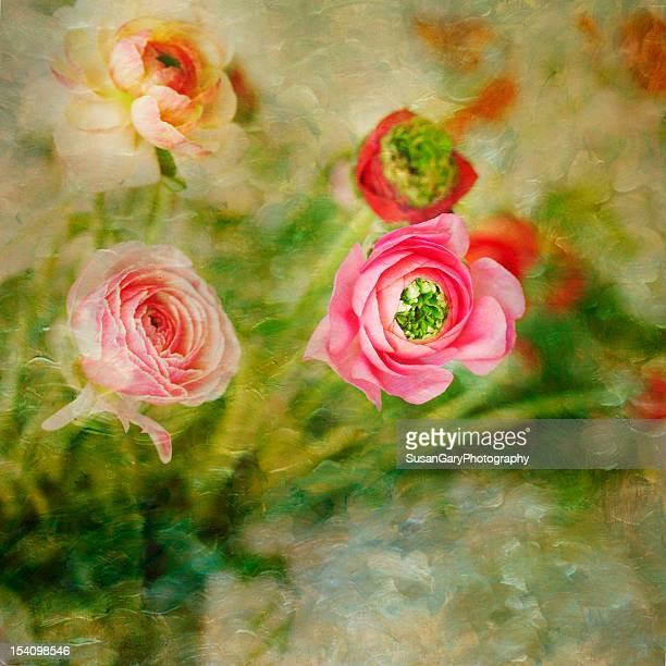 Ranunculus Floral Painterly