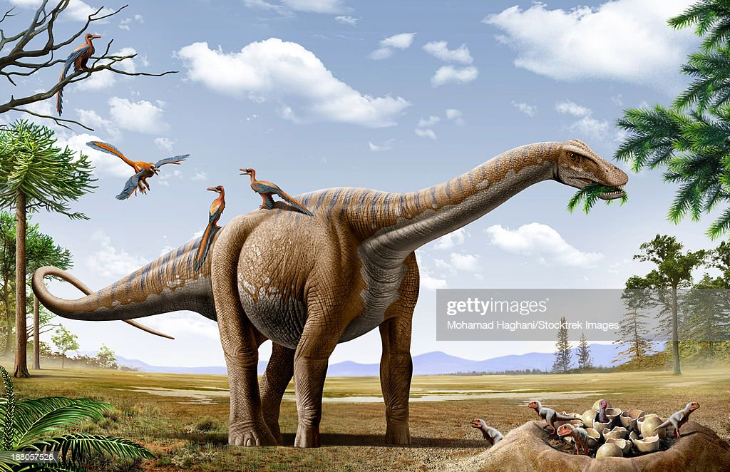 A Rapetosaurus is feeding from conifers leaf, with some Rahonavis on it's back and newborn Majungasaurus babies in their nest. : stock illustration