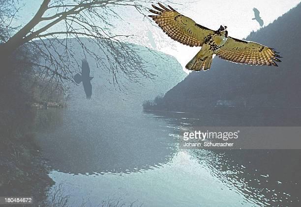 raptor flight at delaware water gap nra - animal limb stock illustrations, clip art, cartoons, & icons