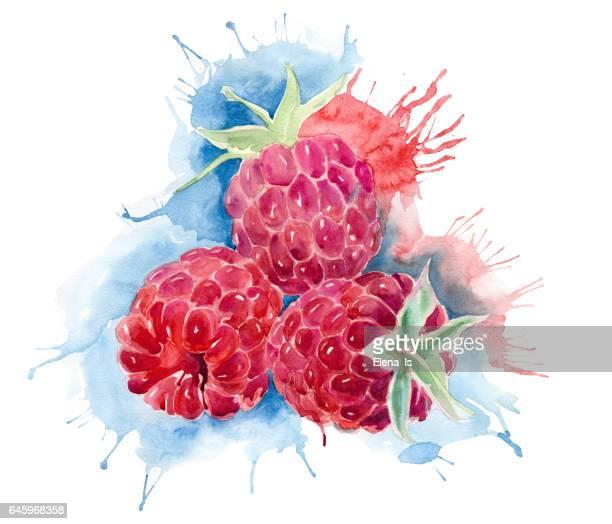raspberries in watercolor splashes - raspberry stock illustrations, clip art, cartoons, & icons