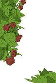 Raspberry Page Design Border