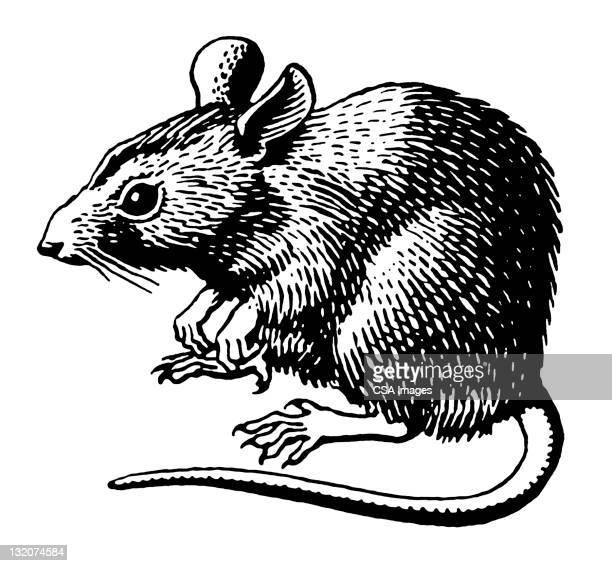 ilustrações, clipart, desenhos animados e ícones de rato - ratazana