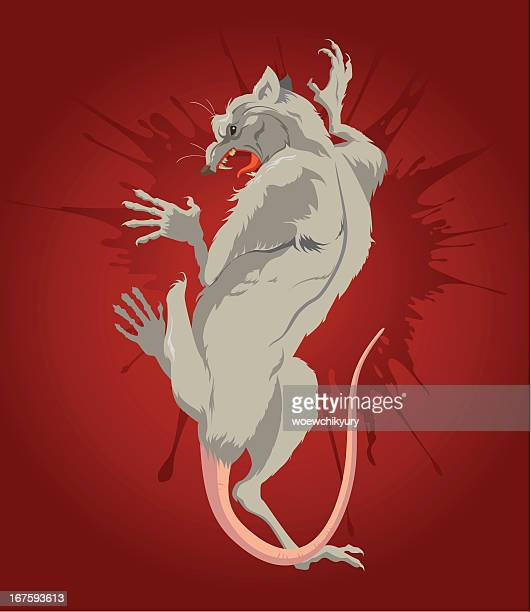 rat in a pool of blood - scavenging stock illustrations