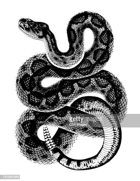 rattlesnake - curled up stock illustrations