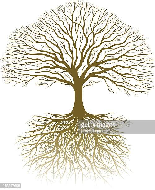 real tree and roots - root stock illustrations, clip art, cartoons, & icons