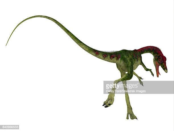 Rear view of Compsognathus dinosaur.