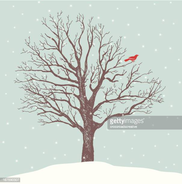 red bird perch - bare tree stock illustrations