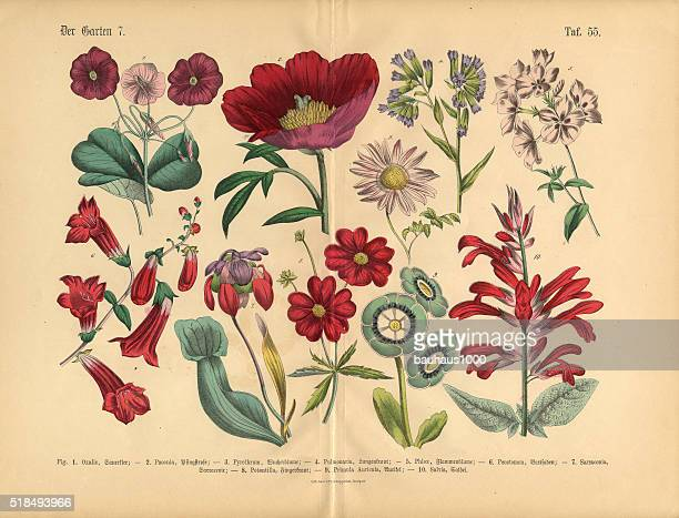 Red Exotic Flowers of the Garden, Victorian Botanical Illustration