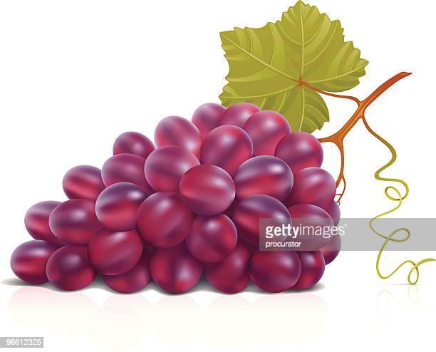 red grape - grape stock illustrations, clip art, cartoons, & icons