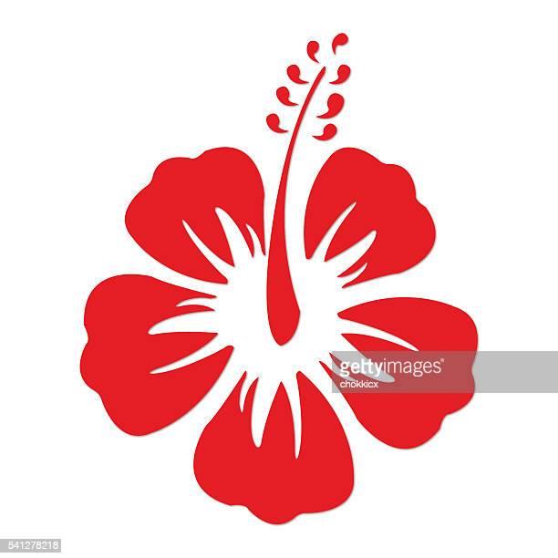 illustrations, cliparts, dessins animés et icônes de rouge hibuscus - hibiscus