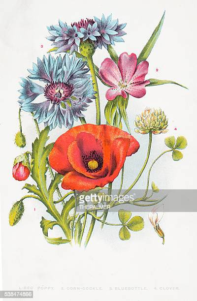 red poppy and other wild flowers - ranunculus stock illustrations, clip art, cartoons, & icons