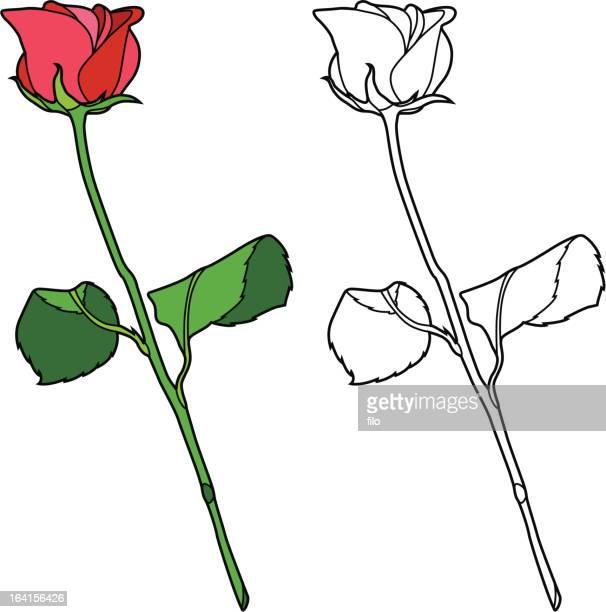 red rose - plant stem stock illustrations