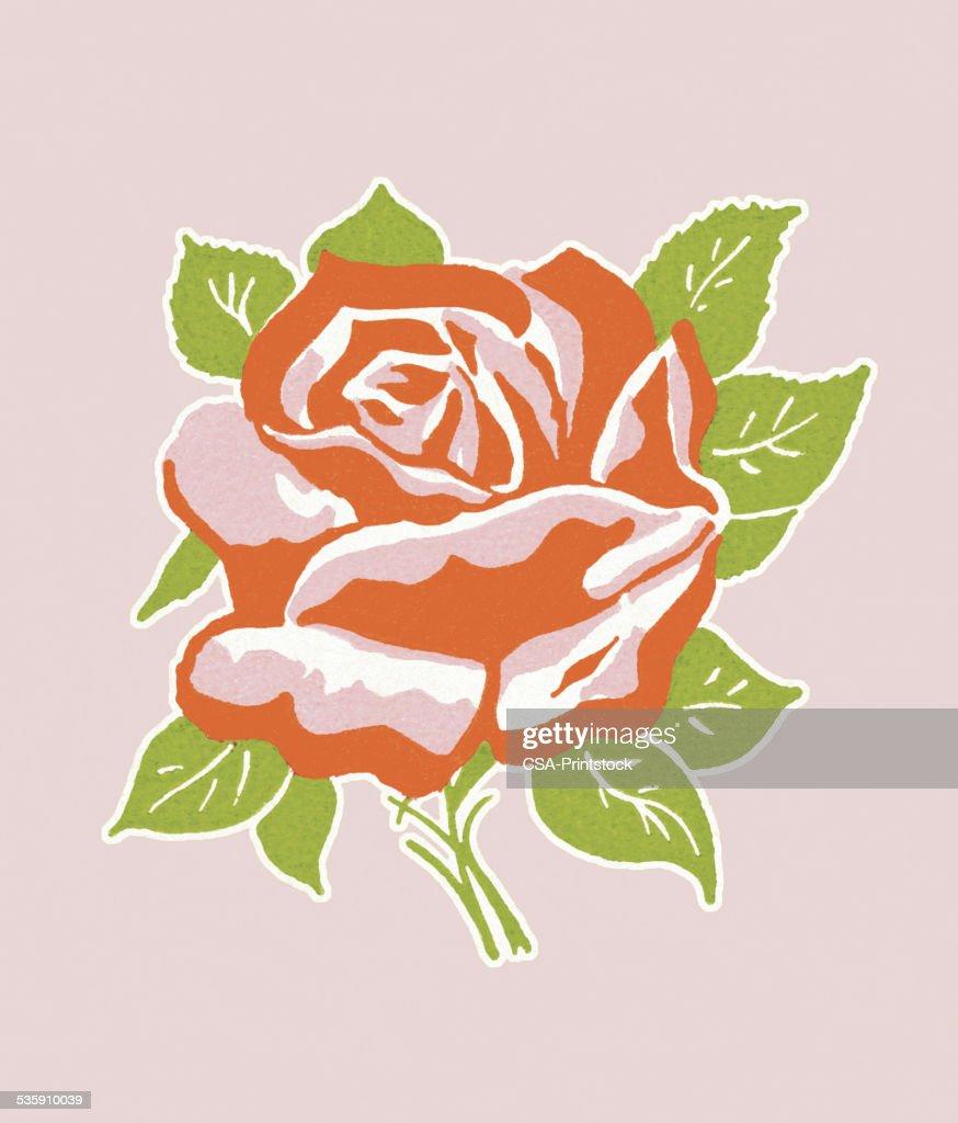 Rosa vermelha : Ilustração de stock