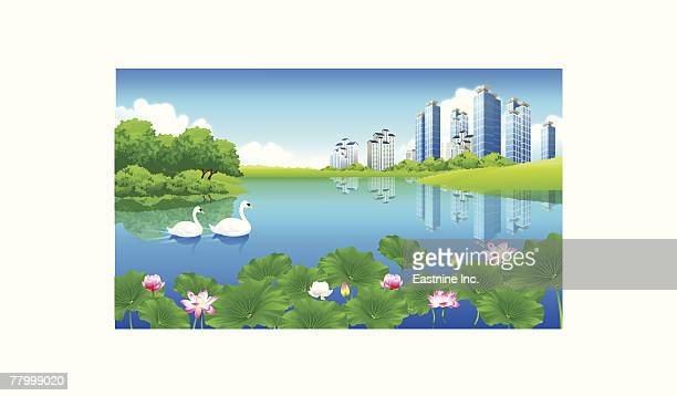 reflection of buildings in a pond - aquatic organism stock illustrations