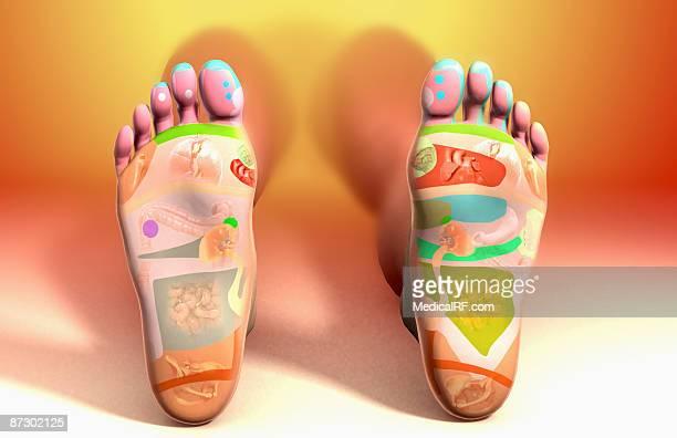 reflexology foot map - reflexology stock illustrations