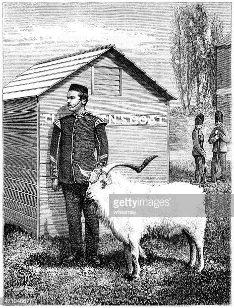 Regimental goat mascot standing to attention (Victorian illustration)