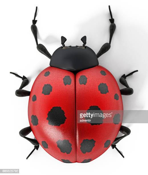 3D rendered ladybug isolated on white
