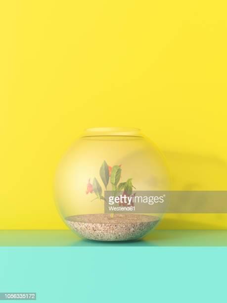 illustrations, cliparts, dessins animés et icônes de 3d rendering, goldfish bowl on shelf against yellow background - poisson rouge