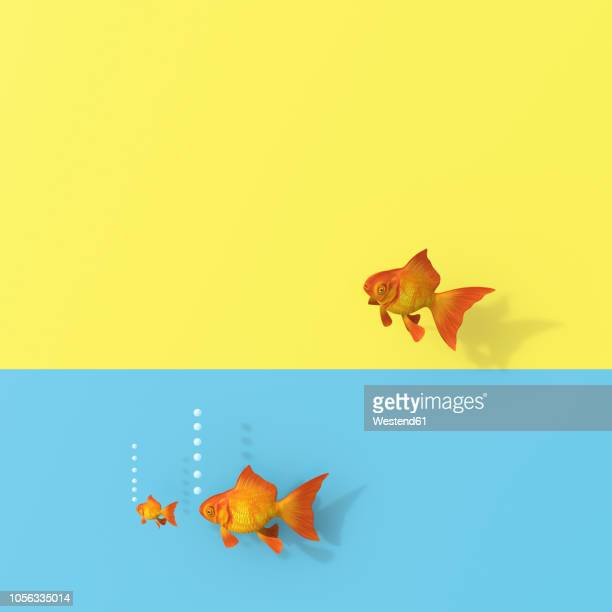 3d rendering, goldfish group swimming in water, one trying to escape - following stock illustrations